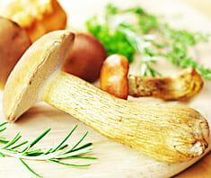 Pilze – Gaumenkitzel und Gefahrenquelle