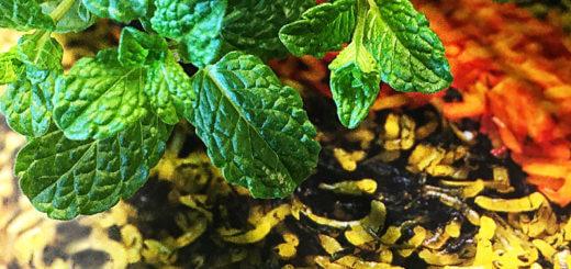 Persischer Spinatreis mit Rosinen