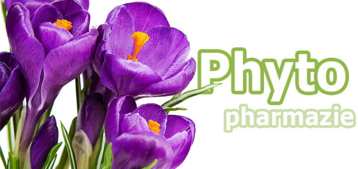 Phytopharmazie: von der Heilkraft der Pflanzen