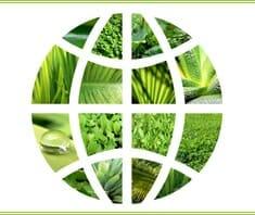 Allergien und Umwelt