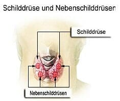 Schilddrüse, Schildrüsenerkrankung