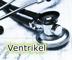 Medizinlexikon: Ventrikel