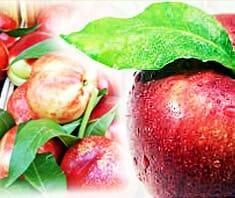 Ballaststoffe: multifunktionelle Gesundheitsvorsorger