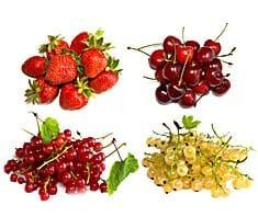 Beeren und Kirschen - Kulinarium