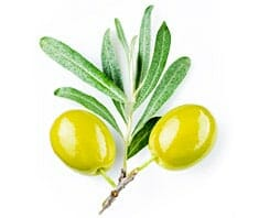Speiseöle im Überblick: Olivenöl bis Sesamöl