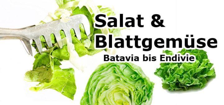 Batavia bis Endivie | Salat & Blattgemüse