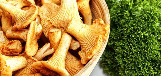 Austernpilze bis Eierschwammerl | Pilze & Schwammerl