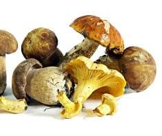 Pilze, Schwammerl