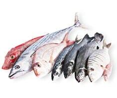 Ernährungscorner-Corner: Fisch & Meeresfrüchte