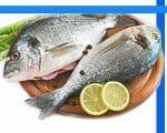 Fisch – eine Orientierungshilfe