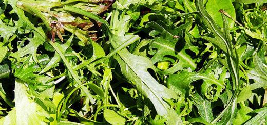 Rucolasalat mit Putenleber | Rezept
