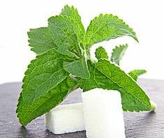 Stevia - Süßkraut