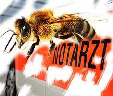 Insektengiftallergie: anaphylaktischer Schock