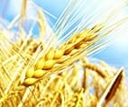 Getreide & Getreideprodukte | Kalorientabelle