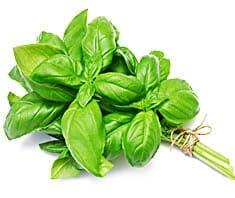 Basilikum | Heilpflanzenlexikon