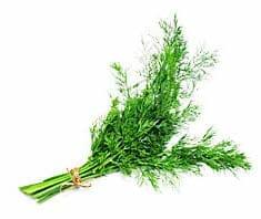 Dill | Heilpflanzenlexikon