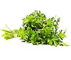 Petersilie | Heilpflanzenlexikon