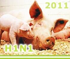 Schweinegrippe 2011 H1N1