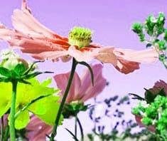 Heilpflanzen, Phytotherapie, Naturheilmittel