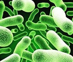 Probiotika, Lactobacillus acidophilus, Lactobacillus casei, Bifidobakterien