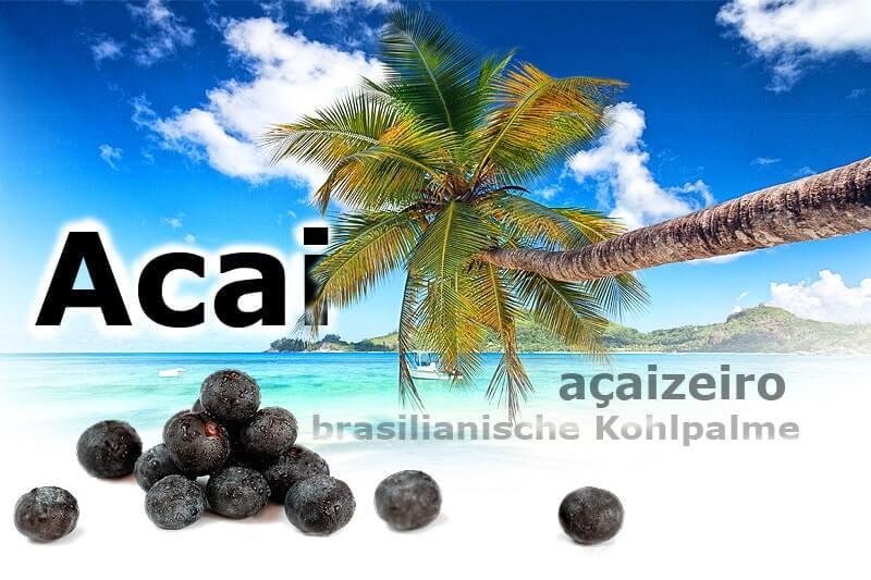 Açaí - die Beeren der brasilianischen Kohlpalme
