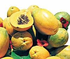 Papaya, Baummelone, Hausmittel