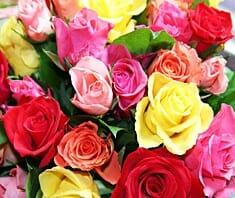 Rose, Apotheker-Rose, Hausmittel