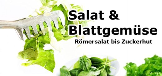 Römersalat bis Zuckerhut | Salat & Blattgemüse