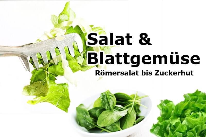 Römersalat bis Zuckerhut   Salat & Blattgemüse