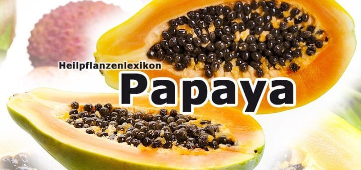 Papaya   Heilpflanzenlexikon