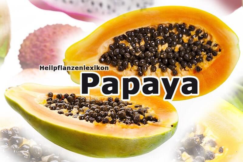 Papaya | Heilpflanzenlexikon