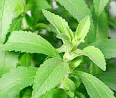Stevia als Süßstoff in der EU erlaubt