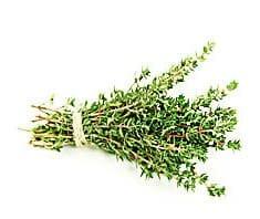 Thymian | Heilpflanzenlexikon