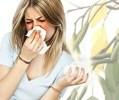 Allergien lassen Immunsystem entgleisen