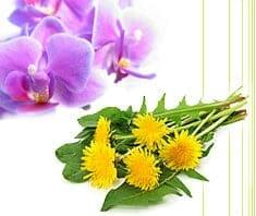 Wildpflanzen & Blüten – gesund durch Bitterstoffe