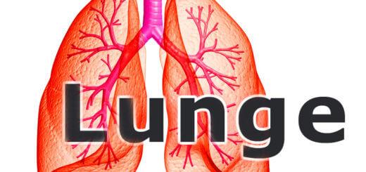 Medizinlexikon: Lunge mit Bronchien