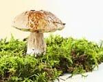 Pilze erkennen