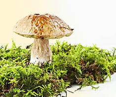 Pilze – gut oder giftig?