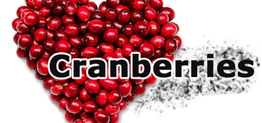 Cranberries – bioaktive Substanzen schützen vor Krankheiten