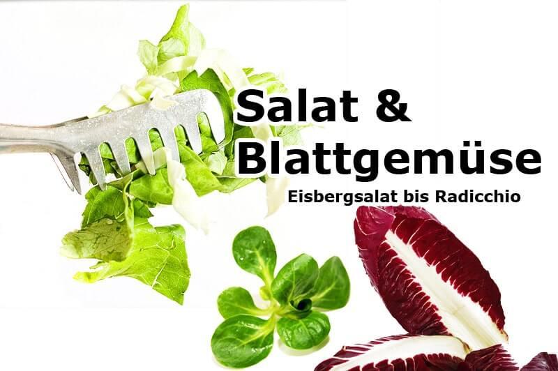 Eisbergsalat bis Radicchio | Salat & Blattgemüse
