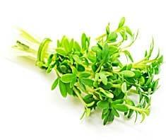 Kresse | Heilpflanzenlexikon