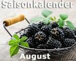 Saisonkalender Obst & Gemüse: August