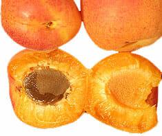 Aprikosenkerne - gesund oder gefährlich?