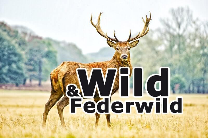 Wild & Federwild