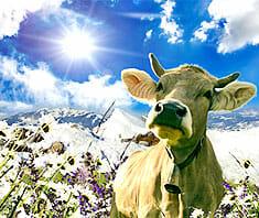 Laktoseintoleranz im Alter – Fakten über die Milchzuckerunverträglichkeit