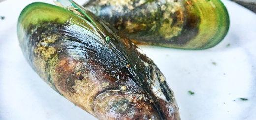 Grünlippmuscheln, Grünschalenmuscheln aus Neuseeland