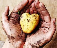 Kartoffel, Erdapfel, Grundbirn – die tolle Knolle