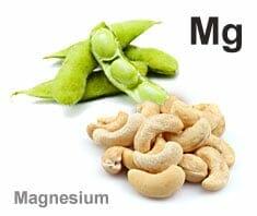 Lebensmittel, die als Magnesiumlieferanten dienen