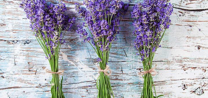 Lavendel – der Alleskönner