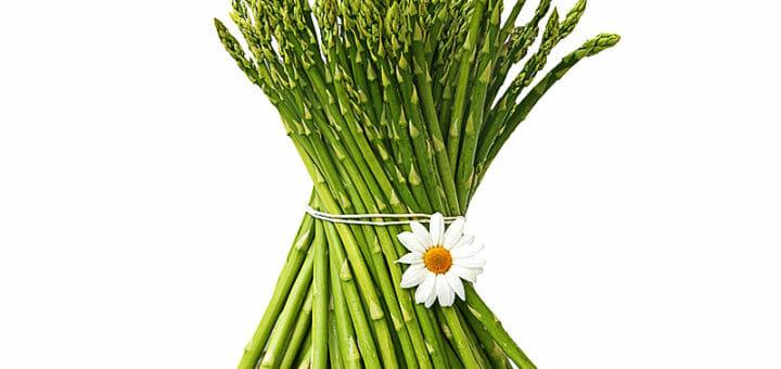 Spargel | Heilpflanzenlexikon